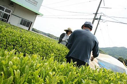 出雲国の紅茶_1